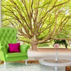 Papier peint arbre centenaire