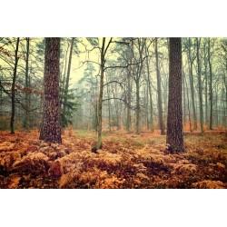 Adhésif automne dans la forêt