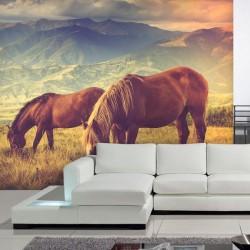 chevaux dans le montagne