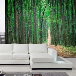 Papier peint arbres forestiers